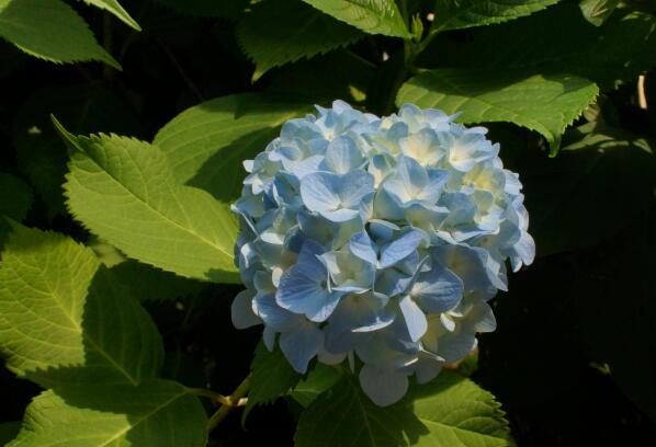 http://www.furoku.tabisanpo.com/20120607004.jpg