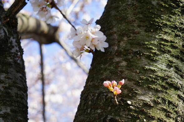 http://www.furoku.tabisanpo.com/2014003310008.JPG